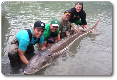 picture of sturgeon fishing